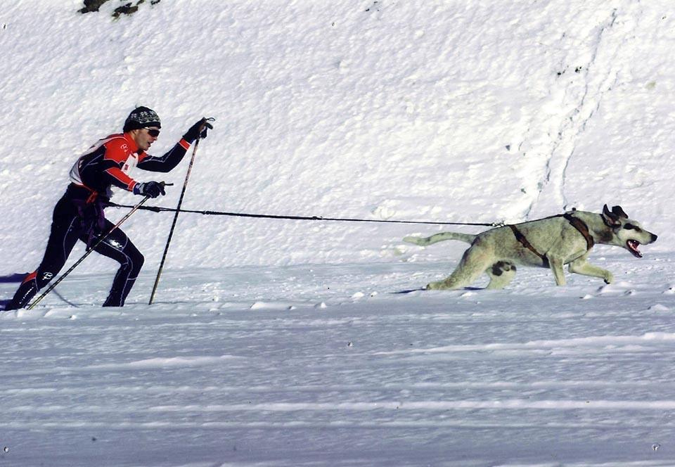 Sports canins en sentier